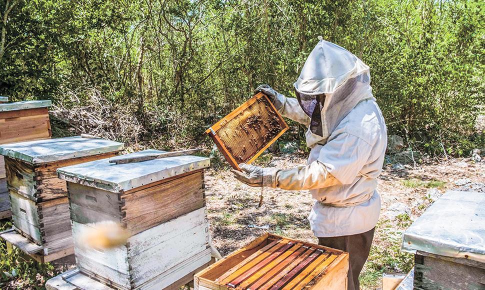 ASEFOGA Y UPA-UCE EXTREMADURA promueven APICAMBIO, proyecto para paliar los efectos del cambio climático en la apicultura