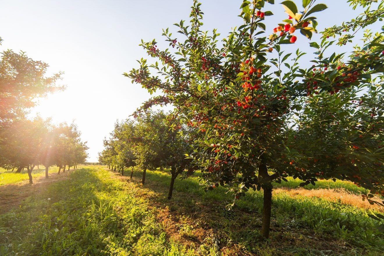 La Red de Asesoramiento en Producción Ecológica de Extremadura, ya es una realidad