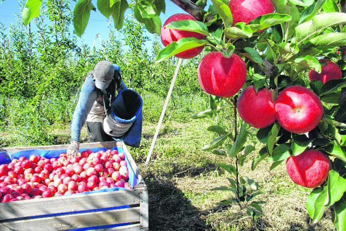 La fruticultura, sector clave para frenar la despoblación