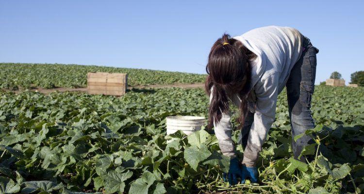 Asaja Extremadura alerta sobre la preocupante subida del paro agrícola en la región por la sinrazón de los sindicatos