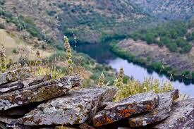 Extremadura y las regiones lusas Centro y Alentejo trabajarán a favor de la conservación del patrimonio natural de La Raya