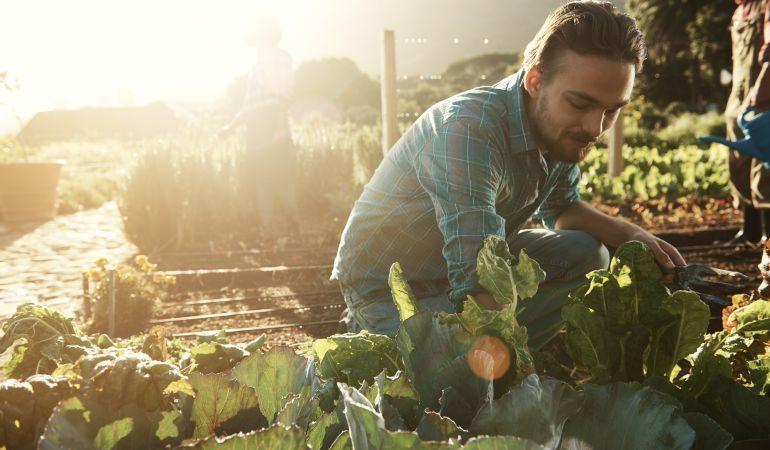 1.703 jóvenes agricultores extremeños cobran 4,3 millones de euros como anticipo de la PAC