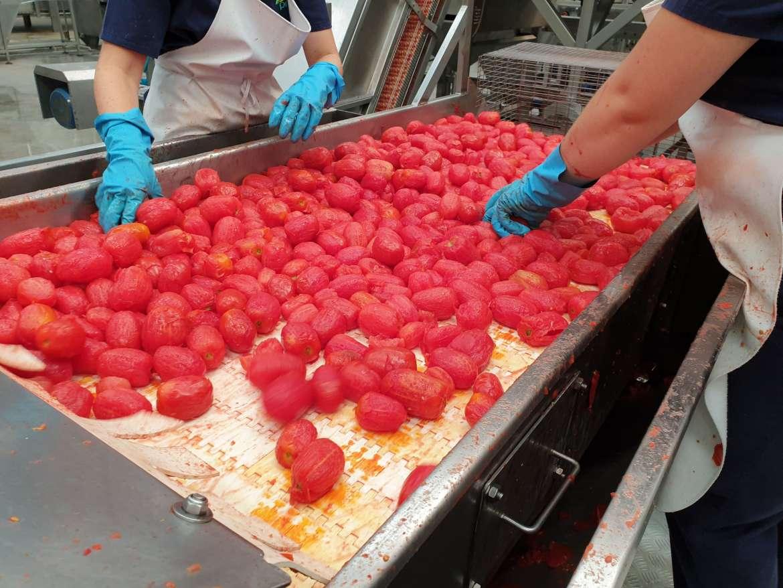 Se abonan las nóminas de la PAC del tomate a pequeños agricultores extremeños