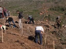 Presentada la 17ª edición del programa Plantabosques, que oferta 620 plazas para trabajos de voluntariado ambiental en Extremadura y Portugal