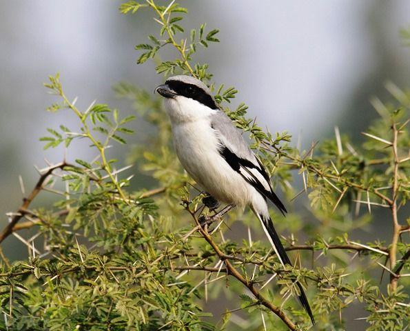 """SEO/BirdLife pone en marcha la campaña """"Elige el ave del año del 2020"""""""
