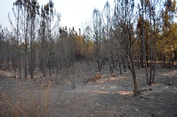 Trabajos para la prevención de incendios forestales en el valle de Jola