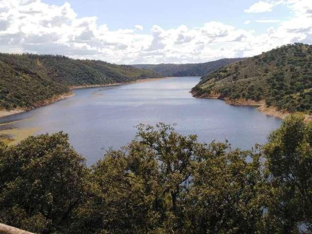Azolla, la planta invasora, desaparece de Monfragüe y de varios tramos del Tajo