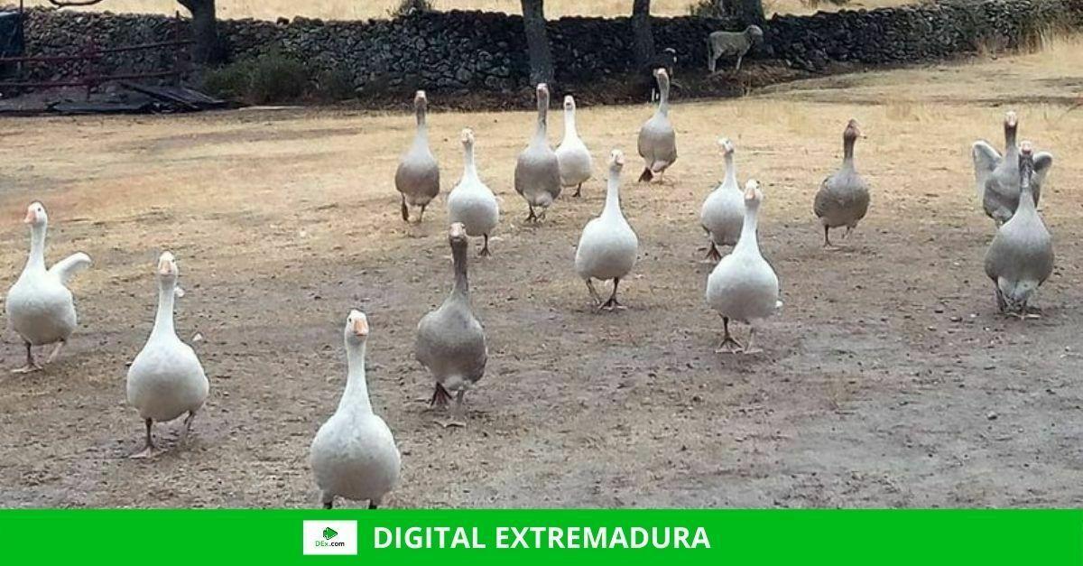 El Santuario Plumas de Cáceres pide ayuda para ampliar los establos de los animales que allí habitan