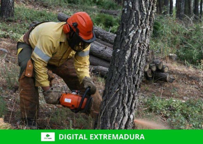 El Plan INFOEX interviene en 25 incendios forestales durante esta semana